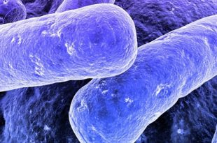 plastikleri yiyerek yok edecek bakteriler aslinda nasil calisiyorlar 310x205 - Plastikleri Yiyerek Yok Edecek Bakteriler, Aslında Nasıl Çalışıyorlar?