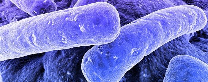 Plastikleri Yiyerek Yok Edecek Bakteriler, Aslında Nasıl Çalışıyorlar?