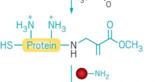 protein modifikasyonu icin bilgisayar destekli reaktif lizin tasarimi 310x165 - Protein Modifikasyonu İçin Bilgisayar Destekli Reaktif Lizin Tasarımı