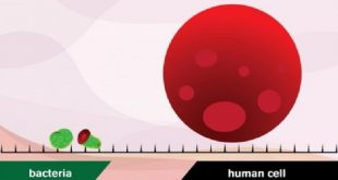 sivri grafenler implantlardaki bakterileri oldurebilir 310x165 - Sivri Grafenler İmplantlardaki Bakterileri Öldürebilir