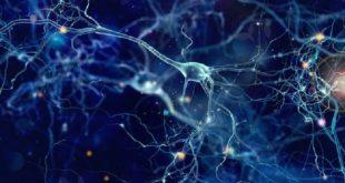 3 d mini insan beyinleri baslica akil hastaliklarinin genetik temelleri uzerine yeni bir isik tuttu 310x165 - 3-D 'Mini İnsan Beyinleri' Başlıca Akıl Hastalıklarının Genetik Temelleri Üzerine Yeni Bir Işık Tuttu