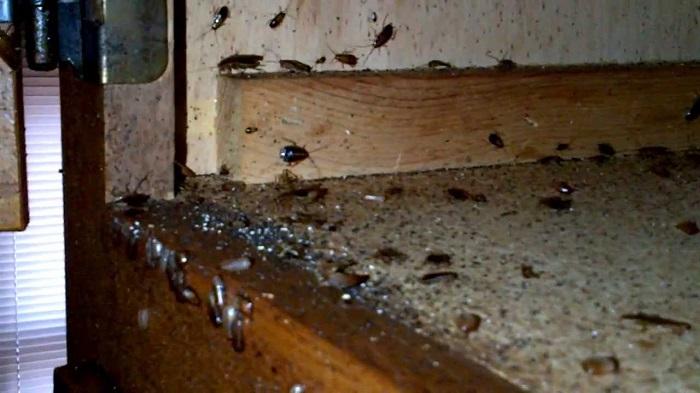hamam boceklerini oldurmek neden zordur - Hamam Böceklerini Öldürmek Neden Zordur?