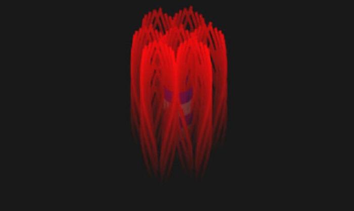 İnsan Kemiğinin Muhteşem Nano Yapısının Ortaya Çıkarılması