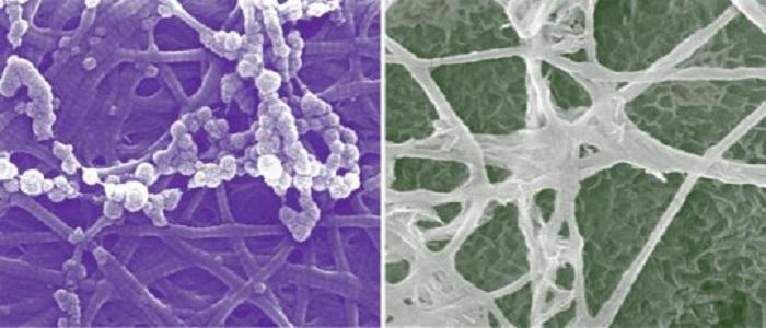 Kemik Gelişiminde Yeni Hücresel Analizler