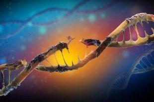 nanoparcaciklar hucresel bir bariyer boyunca beyin hucrelerinde dna hasarina sebep olabilirler 310x205 - Nanoparçacıklar, Hücresel Bir Bariyer Boyunca Beyin Hücrelerinde Dna Hasarına Sebep Olabilirler