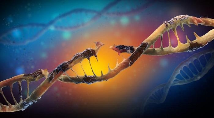 Nanoparçacıklar, Hücresel Bir Bariyer Boyunca Beyin Hücrelerinde Dna Hasarına Sebep Olabilirler