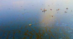 yag molekullerini parcalayan bakteriler gelecekte petrol sizintilarini temizleyebilir 310x165 - Yağ Moleküllerini Parçalayan Bakteriler Gelecekte Petrol Sızıntılarını Temizleyebilir
