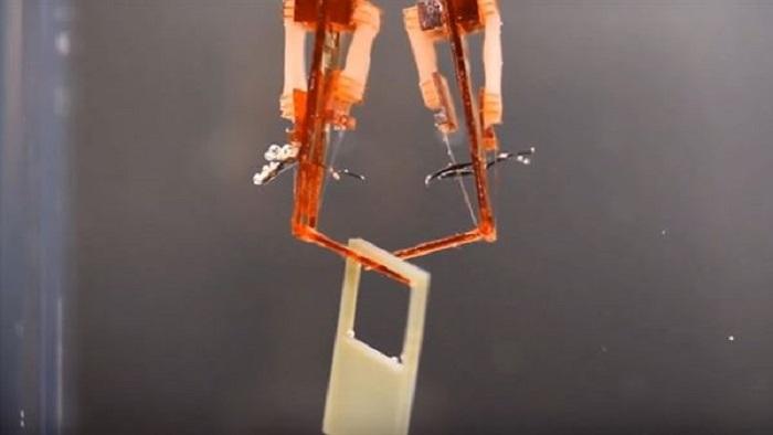 Bilim İnsanları Canlı Kas Dokusuna Sahip Biyo-Hibrit Robot Geliştirdi