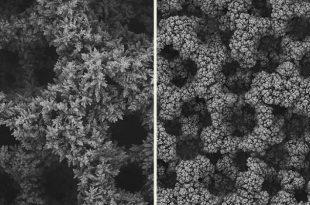 bu yontem karbondioksitin monomere cevrimini ikiye katliyor 310x205 - Bu Yöntem Karbondioksitin Monomere Çevrimini İkiye Katlıyor