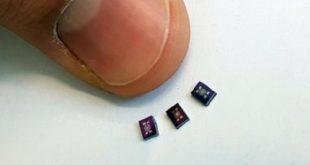 elektronik kurtarma kopekleri 310x165 - Elektronik Kurtarma Köpekleri