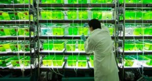 yosundan biyoenerji uretildi 310x165 - Yosundan Biyoenerji Üretildi
