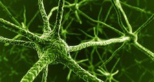 akillara durgunluk veren stanford arastirmasi insan kan hucrelerini fonksiyonel noronlara donusturuyor 310x165 - Akıllara Durgunluk Veren Stanford Araştırması İnsan Kan Hücrelerini Fonksiyonel Nöronlara Dönüştürüyor