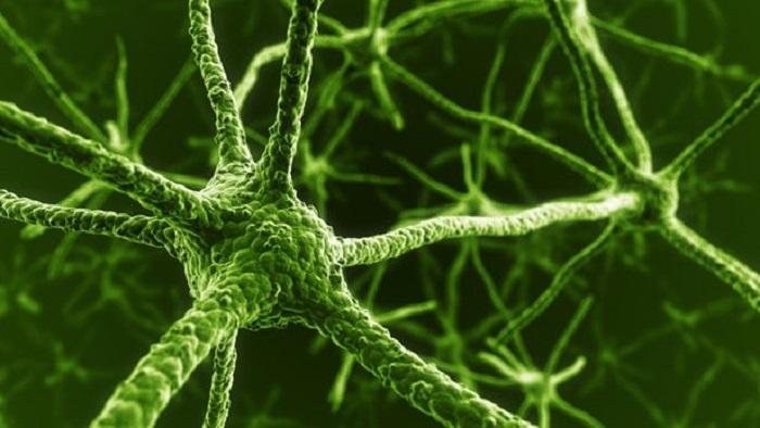 Akıllara Durgunluk Veren Stanford Araştırması İnsan Kan Hücrelerini Fonksiyonel Nöronlara Dönüştürüyor