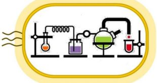 kendi kendini surduren kimyasal reaksiyon donguleri ilac uretimini degistirebilir 310x165 - Kendi Kendini Sürdüren Kimyasal Reaksiyon Döngüleri, İlaç Üretimini Değiştirebilir