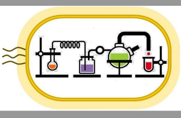 Kendi Kendini Sürdüren Kimyasal Reaksiyon Döngüleri, İlaç Üretimini Değiştirebilir