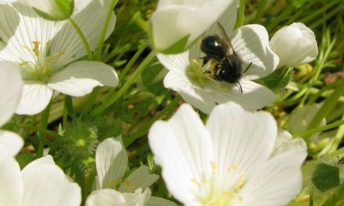 yagli tohumlu mahsulun atiklari cildi gunesten koruyan bilesikler iceriyor - Yağlı Tohumlu Mahsulün Atıkları, Cildi Güneşten Koruyan Bileşikler İçeriyor
