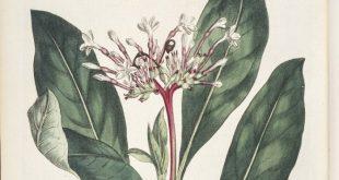 yapilan bu yeni arastirma insanlari sakin tutan bitkilerin sirlarini aciga cikardi 310x165 - Yapılan Bu Yeni Araştırma İnsanları Sakin Tutan Bitkilerin Sırlarını Açığa Çıkardı