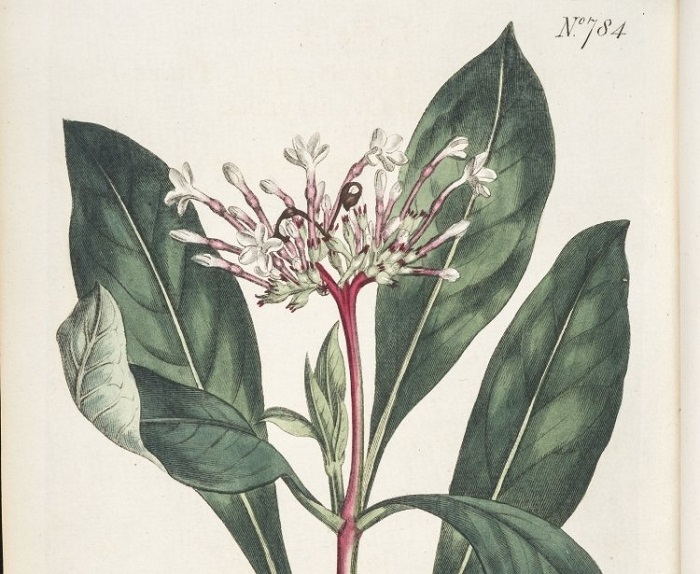 Yapılan Bu Yeni Araştırma İnsanları Sakin Tutan Bitkilerin Sırlarını Açığa Çıkardı