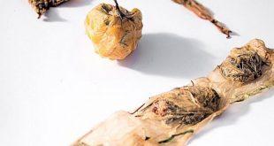 yenilebilir ve plastik icermeyen bu yiyecek paketi kombucha ile uretildi 310x165 - Yenilebilir ve Plastik İçermeyen Bu Yiyecek Paketi Kombucha ile Üretildi!
