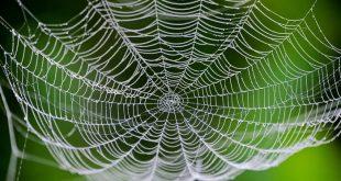 bilim insanlari ipek boceklerine orumcek agi geni aktararak ozel bir ag elde etmeyi basardi 310x165 - Bilim İnsanları, İpek Böceklerine Örümcek Ağı Geni Aktararak Özel Bir Ağ Elde Etmeyi Başardı