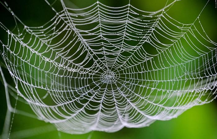 bilim insanlari ipek boceklerine orumcek agi geni aktararak ozel bir ag elde etmeyi basardi - Bilim İnsanları, İpek Böceklerine Örümcek Ağı Geni Aktararak Özel Bir Ağ Elde Etmeyi Başardı