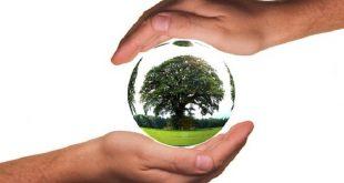 biyolojik cesitliligin korunmasina izin verirken yenilenebilir enerjiden yararlanma 310x165 - Biyolojik Çeşitliliğin Korunmasına İzin Verirken Yenilenebilir Enerjiden Yararlanma