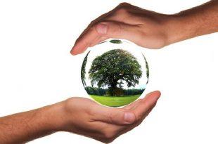 biyolojik cesitliligin korunmasina izin verirken yenilenebilir enerjiden yararlanma 310x205 - Biyolojik Çeşitliliğin Korunmasına İzin Verirken Yenilenebilir Enerjiden Yararlanma