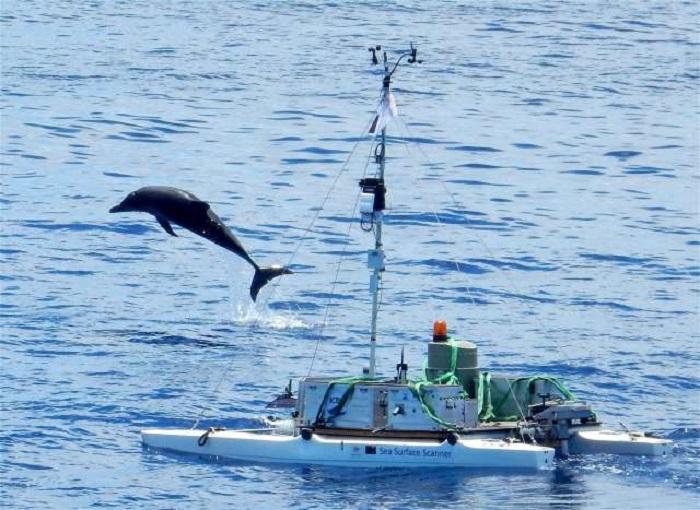 Mavi Renk Küçük Kabukluları Deniz Yüzeyinde Güneş ve Düşmanlarına Karşı Koruyor