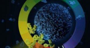 nano sualti tasiyicilarla bas agrilari ve tumorleri hedefleme 310x165 - Nano-Sualtı Taşıyıcılarla Baş Ağrıları ve Tümörleri Hedefleme