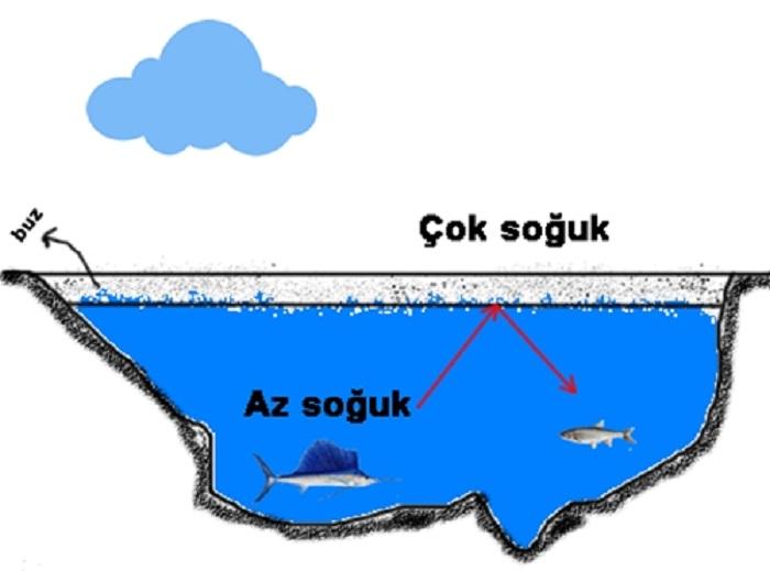 Suyun Donduğu Zaman Genişlemesinin Sebebi Nedir?