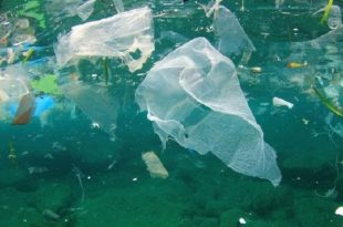 toprak bakterileri bu plastigi seviyor 310x205 - Toprak Bakterileri Bu Plastiği Seviyor