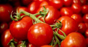 turk bilim insanlari zorlu kosullarda lezzeti artan dayanikli domates gelistirdi 310x165 - Türk Bilim İnsanları; Zorlu Koşullarda Lezzeti Artan, Dayanıklı Domates Geliştirdi