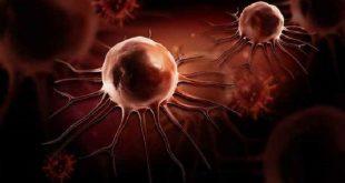bilim insanlari kanser hucrelerinin sonsuz bolunmesinde etkin protein unsurunu etkisiz kildi 310x165 - Bilim İnsanları Kanser Hücrelerinin Sonsuz Bölünmesinde Etkin Protein Unsurunu Etkisiz kıldı