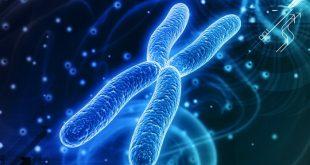 bilim insanlari laboratuvar ortaminda yemek borusu dokusu urettiler 310x165 - Bilim İnsanları, Laboratuvar Ortamında Yemek Borusu Dokusu Ürettiler