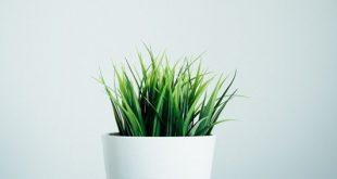 bitkiler de insanlar gibi anesteziden etkileniyorlar 310x165 - Bitkiler de İnsanlar Gibi Anesteziden Etkileniyorlar