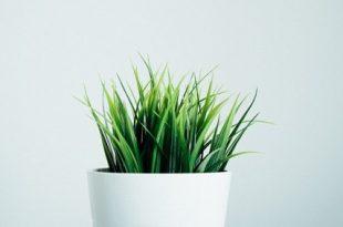 bitkiler de insanlar gibi anesteziden etkileniyorlar 310x205 - Bitkiler de İnsanlar Gibi Anesteziden Etkileniyorlar