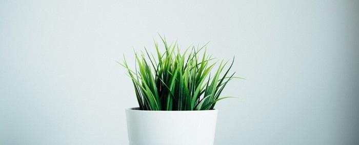 Bitkiler de İnsanlar Gibi Anesteziden Etkileniyorlar