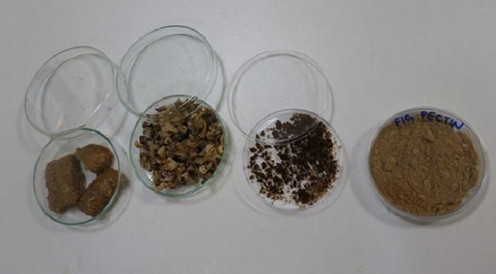 kuru incir kozmetik ilac ve gida endustrisinde kullanilabilecek - Kuru İncir Kozmetik, İlaç ve Gıda Endüstrisinde Kullanılabilecek