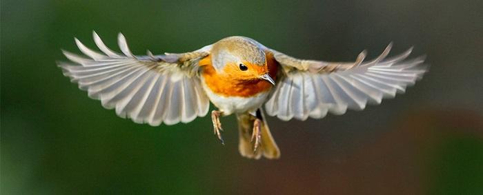 kuslarin dunyanin manyetik alanini nasil gordukleri sonunda anlasildi - Kuşların Dünya'nın Manyetik Alanını Nasıl Gördükleri Sonunda Anlaşıldı