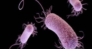 uzmanlara gore ayni anda birden fazla antibiyotik alinabilir 1 310x165 - Uzmanlara Göre Aynı Anda Birden Fazla Antibiyotik Alınabilir