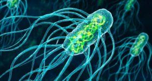 bakteri enfeksiyonlarini engelleyebilecek yeni ilac tasiyicilari bulundu 310x165 - Bakteri Enfeksiyonlarını Engelleyebilecek Yeni İlaç Taşıyıcıları Bulundu