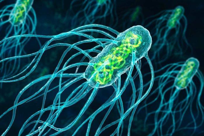 Bakteri Enfeksiyonlarını Engelleyebilecek Yeni İlaç Taşıyıcıları Bulundu