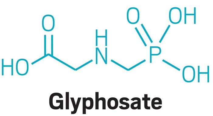 Glifosat, Bal Arısı Bağırsak Bakterilerini Bozabilir