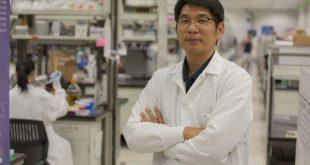 dna nanoyapilarinin katlanmasi konusunda yeni bir origami kesfedildi 310x165 - DNA Nanoyapılarının Katlanması Konusunda Yeni Bir Origami Keşfedildi