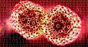 kanserle mucadelede nanotheranostiklerle fototermal tedavi ve fotoakustik goruntuleme 310x165 - Kanserle Mücadelede Nanotheranostiklerle Fototermal Tedavi ve Fotoakustik Görüntüleme