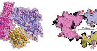 bakteriyel enzim katalizini kucuk bir hazneye tasiyor 310x165 - Bakteriyel Enzim Katalizini Küçük Bir Hazneye Taşıyor