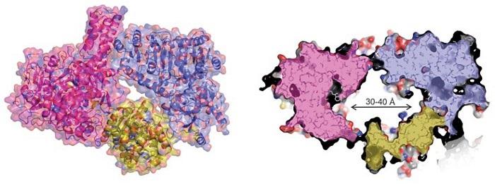 Bakteriyel Enzim Katalizini Küçük Bir Hazneye Taşıyor