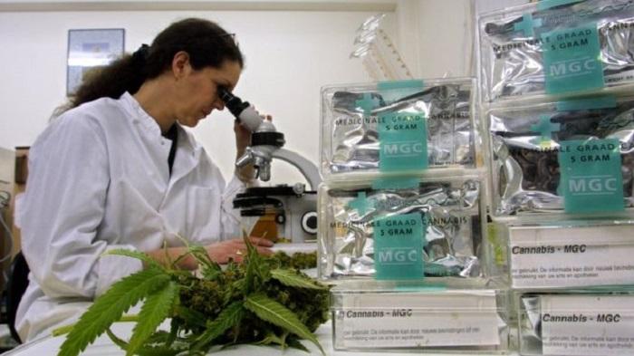 Hollanda'da Uyuşturucu Kaçakçıları Çalıştırmak için Kimya Öğrencilerinin Peşine Düşüyor