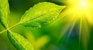 bilim insanlari bitkilerin daha fazla fotosentez yapmasini saglayan bir yontem gelistirdi 310x165 - Bilim İnsanları, Bitkilerin Daha Fazla Fotosentez Yapmasını Sağlayan Bir Yöntem Geliştirdi