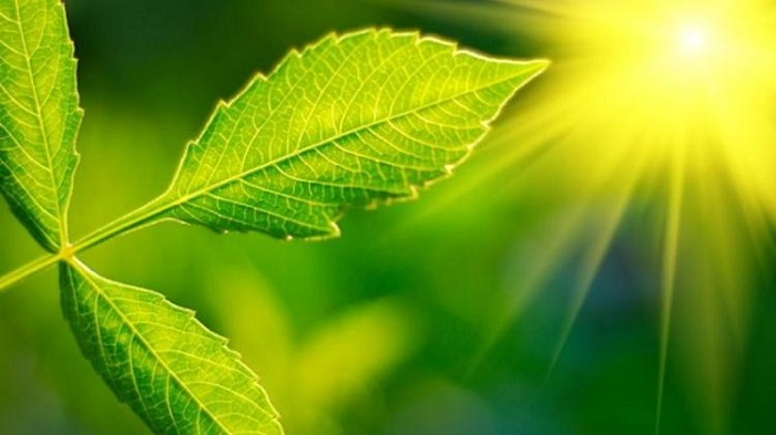 bilim insanlari bitkilerin daha fazla fotosentez yapmasini saglayan bir yontem gelistirdi - Bilim İnsanları, Bitkilerin Daha Fazla Fotosentez Yapmasını Sağlayan Bir Yöntem Geliştirdi